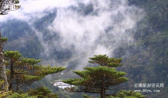 碧罗雪山11.jpg